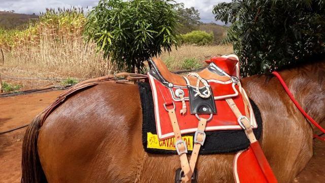 Cavalo - Foto 3