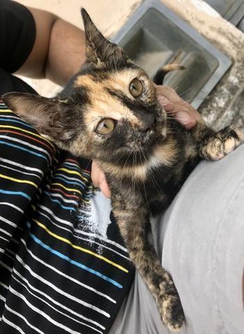 Gatinha rajada para adoção - Foto 4