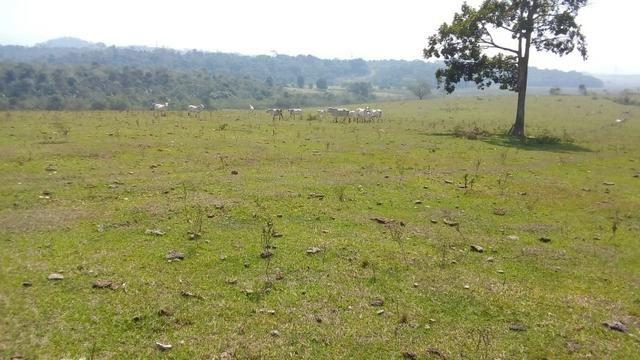 Vendo belíssima fazenda em são vicente 330 alqueires - Foto 15