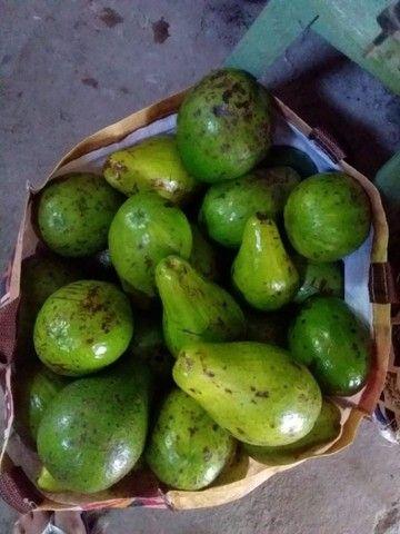 Vendo abacate ?