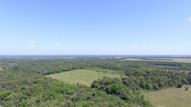 25 hectares na Br316 proximo a Castanhal por 800 mil reais zap *