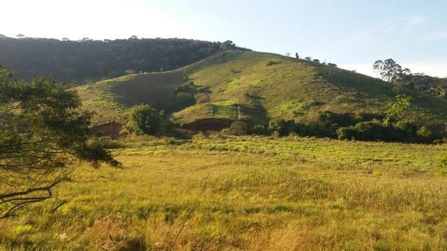 Sitio Taubaté 2,48 Alqs.ótima topografia só terra á 3 km da Rodovia Osvaldo cruz - Leia - Foto 5