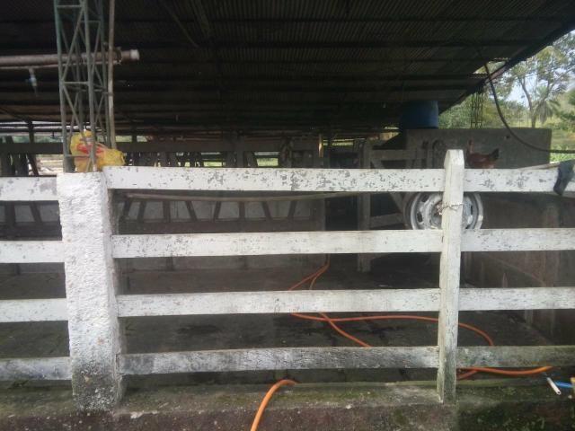 Linda fazenda em Cachoeiras de Macacu 20 alqueires oportunidade!!!! - Foto 16