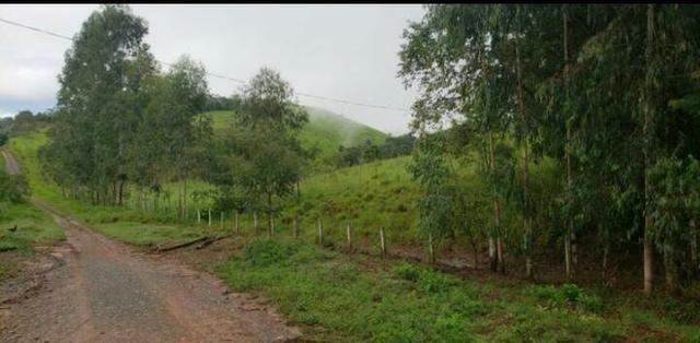 Fazenda em Campo Magro 60 Alqueires - Foto 3