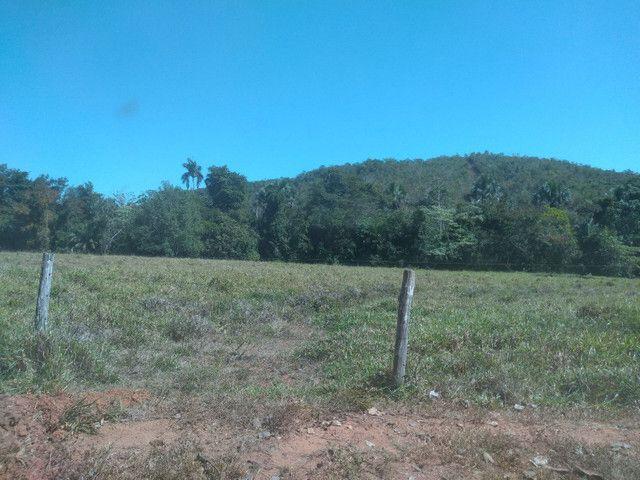 Faz 70 Alq a 15 km da cidade de Paraiso - Foto 3