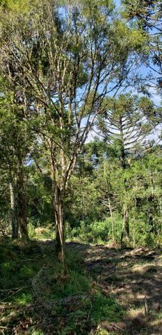 Terreno em Urubici/sítio em Urubici - Foto 4