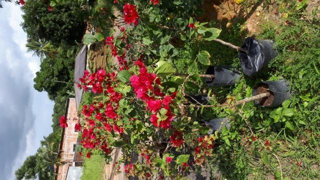 Plantas e grama - Foto 4
