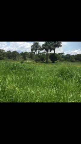 Vendo 650 equitares 85 km de Cuiabá - Foto 3