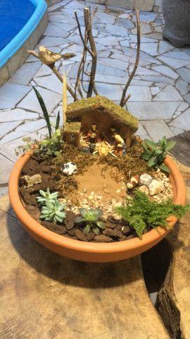 Plantas, Terrarios e Mini Jardins - Foto 3