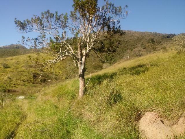 Fazenda 97 Alqs Na Região do Vale do Paraíba SP Negocio de oportunidade - Leia o anúncio - Foto 20
