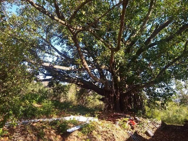 Bela chacrinha, 5km de santo antônio 1km asfalto, casa, açude, galpão, fogão campeiro - Foto 14