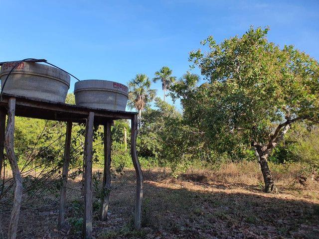 Faz 585 Alq planta os taiao 50 % até 300 Alq vale do Araguaia - Foto 5