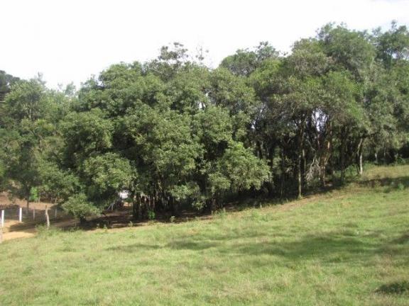 Quitandiha - 7.000 m² - Um belezinha de chácara - CH0143