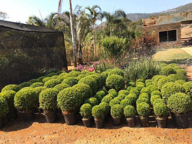 Ornamental ,frutiferas e reflorestamento