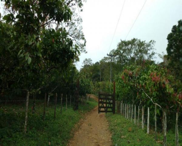 Fazenda sempre alegre a 20km de ilhéus - Foto 19