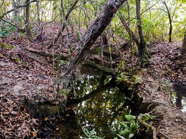 Vende-se uma chácara em Poconé, 50 hectares - Foto 3