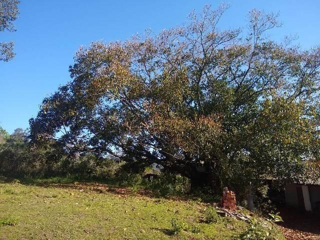 Bela chacrinha, 5km de santo antônio 1km asfalto, casa, açude, galpão, fogão campeiro - Foto 11