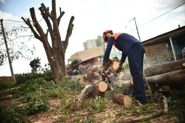 Serviço de derrubada de árvore com motoserra - Foto 2