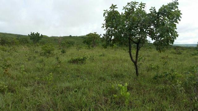 Chácara com área de 4000m², 14 km de Alto Paraíso de Goiás - Foto 11