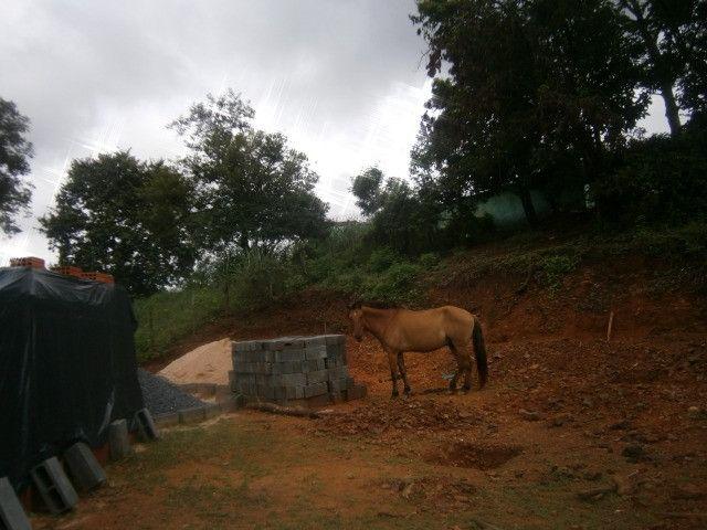 Cavalo arriado com charrete