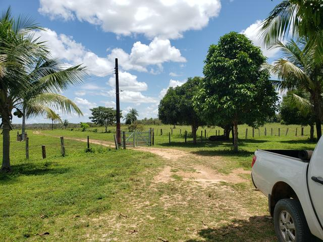 Fazenda, soja e pecuária - Foto 9
