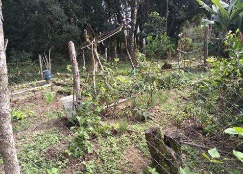 Vendo ou troco chácara em Quitandinha PR - Foto 4