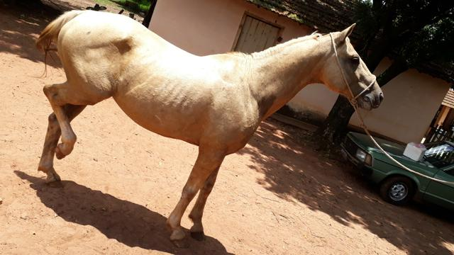 Cavalo de cela - Foto 3