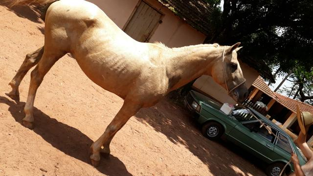 Cavalo de cela