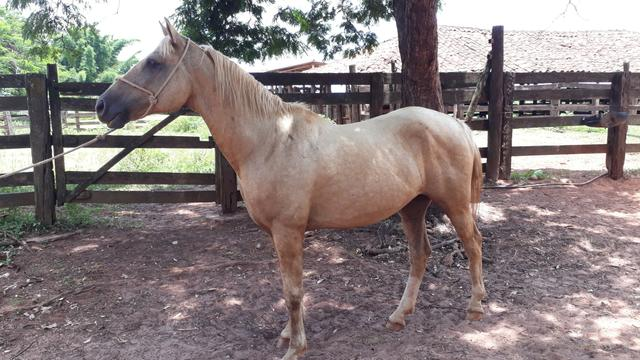 Cavalo de cela - Foto 2