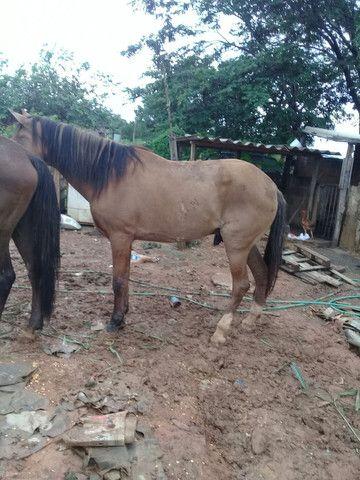 vendo ese cavalo 1700  - Foto 2
