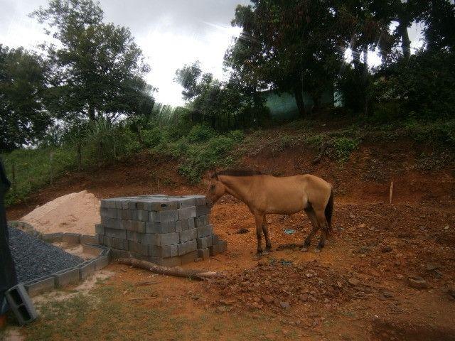 Cavalo arriado com charrete - Foto 4