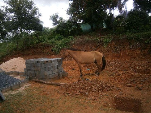 Cavalo arriado com charrete - Foto 5