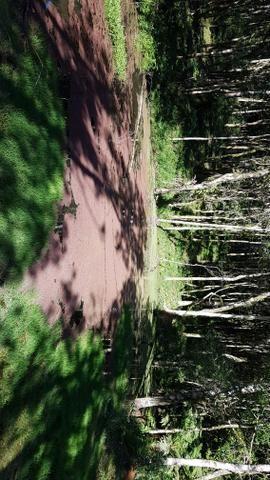 Vendo área para formar chácara em Mandirituba localidade Guapiara 12.000 metros. - Foto 5