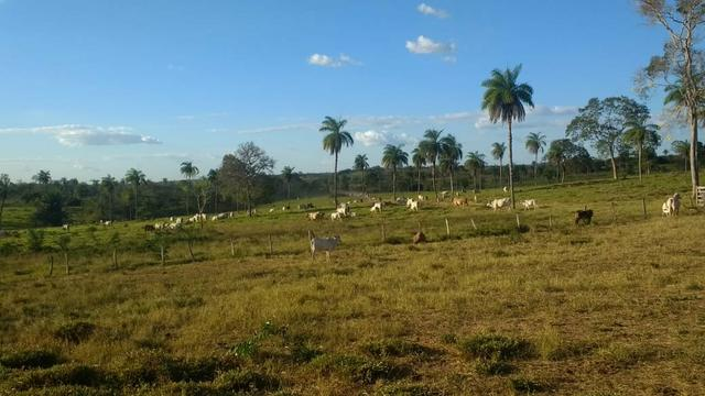 Fazenda - Foto 5