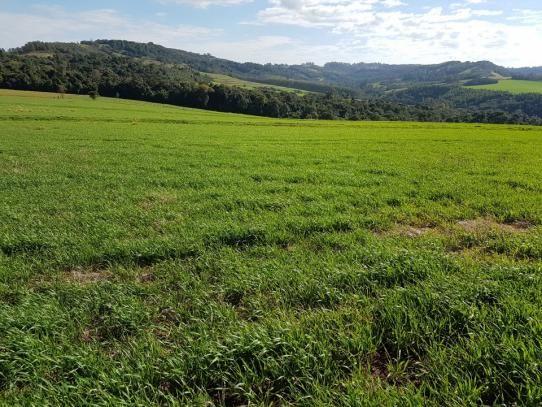 8345 | Sítio à venda em Rural, Santa Maria - Foto 3