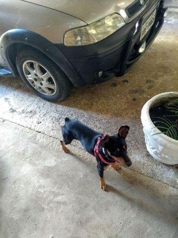 Cachorro pinche número 3 lindo