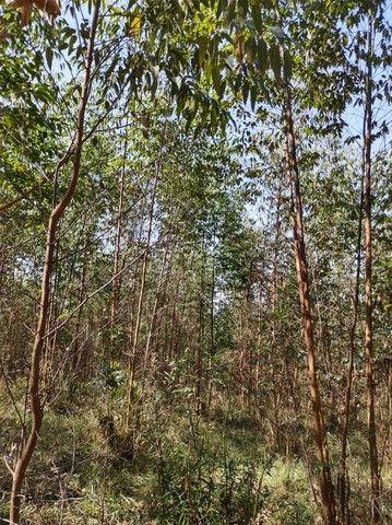 u= mude de vida para o campo e tenha mais paz  - Foto 4