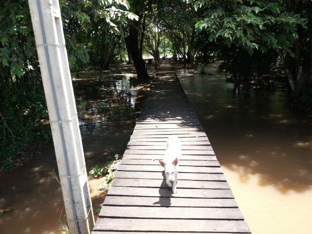 Pesqueiro no pantanal estudo troca - Foto 16