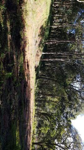 Vendo área para formar chácara em Mandirituba localidade Guapiara 12.000 metros. - Foto 6