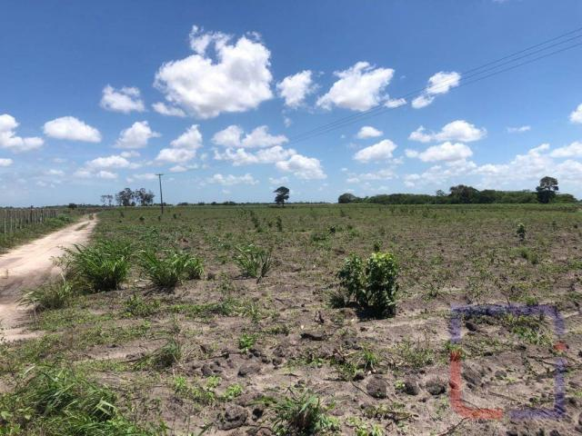 Fazenda com 3 dormitórios à venda, 530000 m² por R$ 1.400.000 - Centro - Curral de Cima/PB - Foto 7