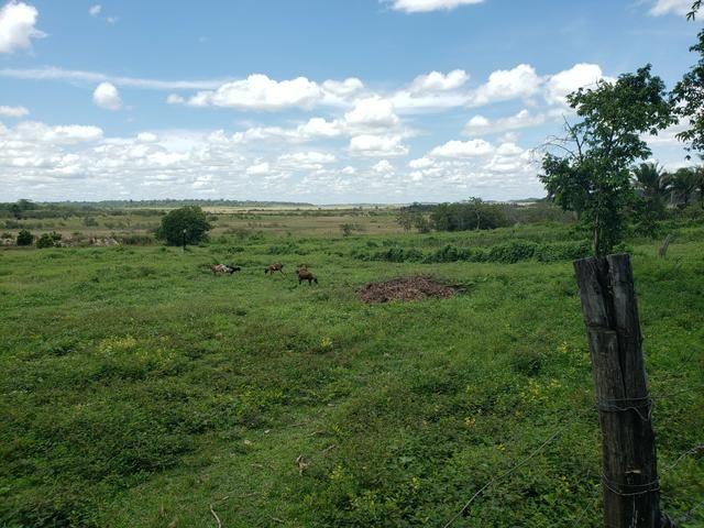 Fazenda, soja e pecuária - Foto 3