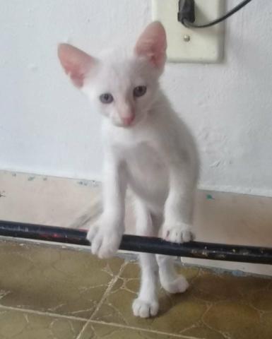 Doação De Filhotes De Gato - Foto 5