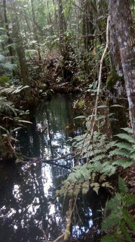 Chácara com área de 4000m², 14 km de Alto Paraíso de Goiás - Foto 2