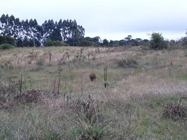 Área 62 hectares