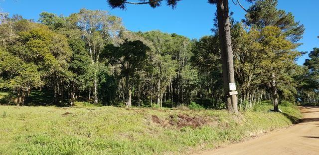 Vendo área para formar chácara em Mandirituba localidade Guapiara 12.000 metros. - Foto 2