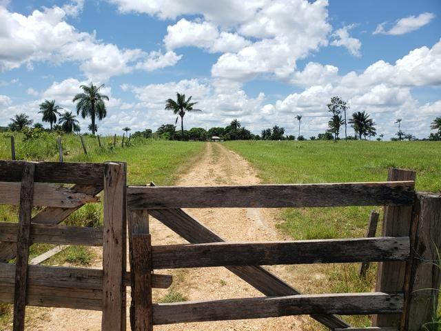 Fazenda, soja e pecuária - Foto 2