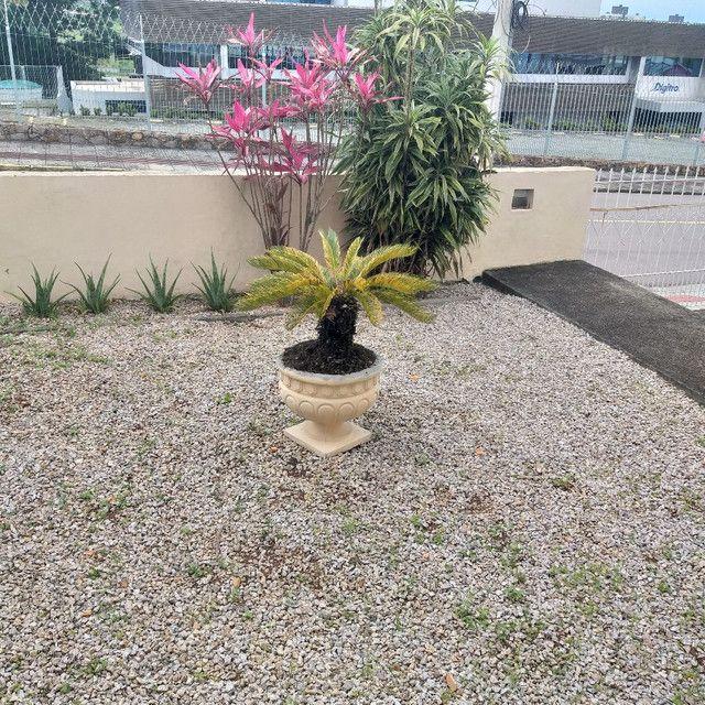Palmeira de Cica - Sagu - Foto 2