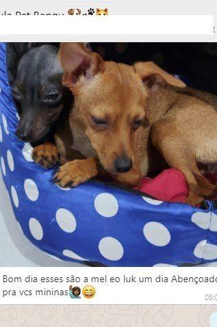 Camas para Pets personalizadas - Foto 6