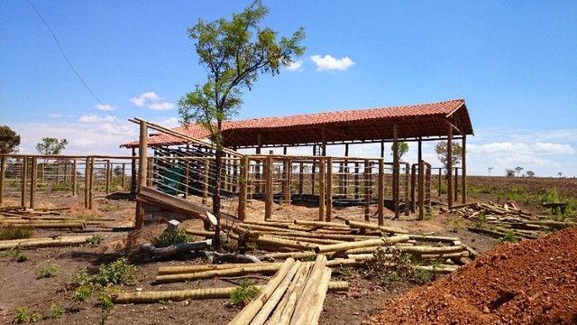 madeira de eucalipto para curral - Foto 2