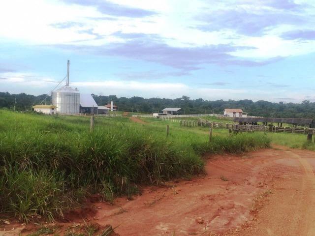Fazenda 873 ha S.J. Rio Claro MT - Foto 6